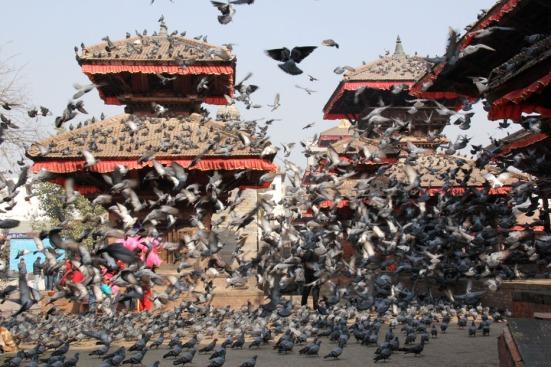 Pigeon chaos in Durbar Square (Kathmandu, Nepal, Dec 2012)