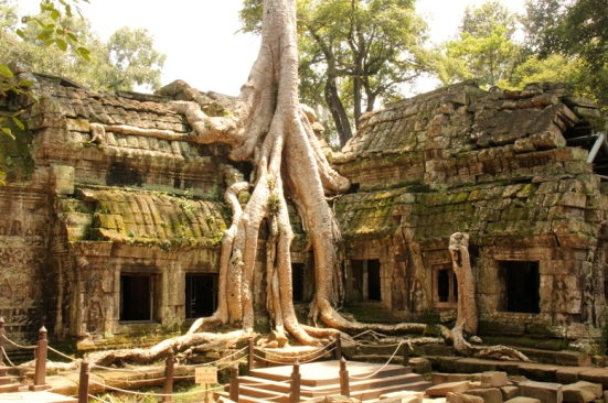 AngkorWatTrees1