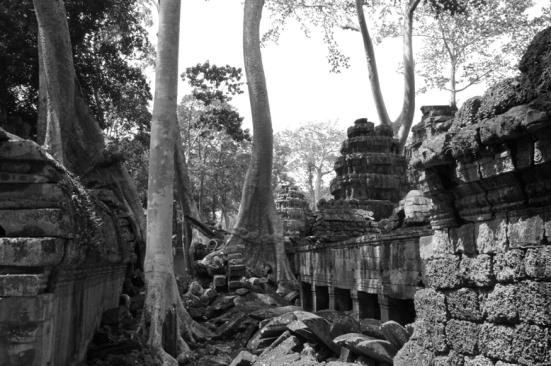 AngkorWatTrees2